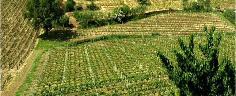 I Migliori Vini Italiani 1231